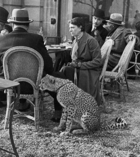 女子坐在在巴黎的一家咖啡厅,1963年与她的宠物猎豹