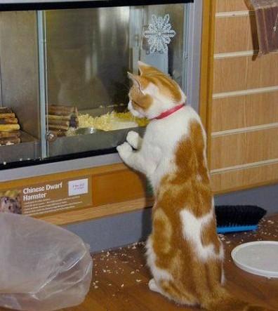 猫咪每天逛宠物店 只为看特价鱼和老鼠
