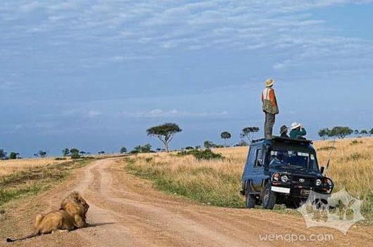 狮子在哪呢
