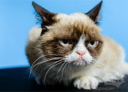互联网的10个喜爱的猫