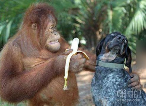 试试吧!你一定会喜欢它!每个人都喜欢香蕉!