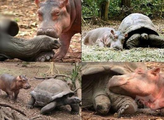 河马和乌龟
