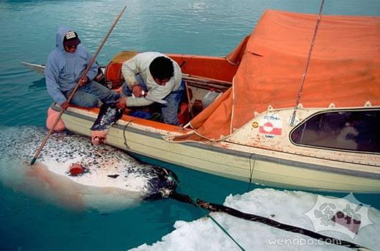 图片:尽管受到保护 但海豚和鲸还是不断遭到猎杀