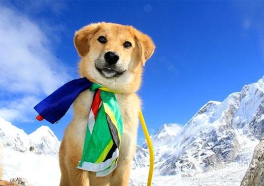 世界上第一只流浪狗爬上珠峰