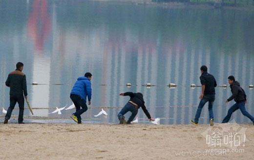 情侣拍照放生鸽子遭疯抢 市民:这可以吃