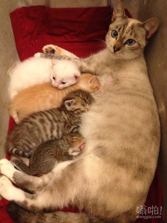 妈妈的猫和她收养的松鼠.. 有现在的两个!
