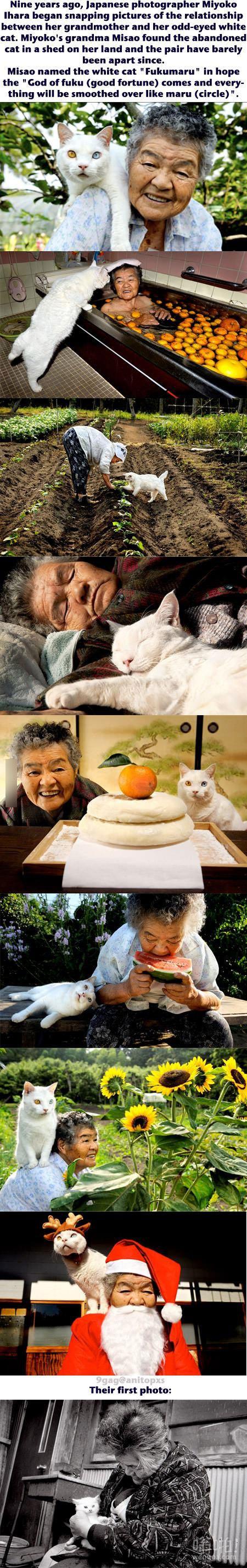 债券之间的祖母和她的鸳鸯眼白猫