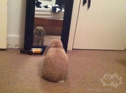 我的兔子每天都这样。不知道他在想什么…