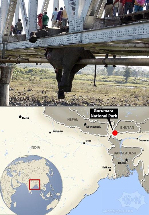 印度旅客列车撞上一群正在过铁路的大象, 七头大象 其中包括两个牛犊丧生