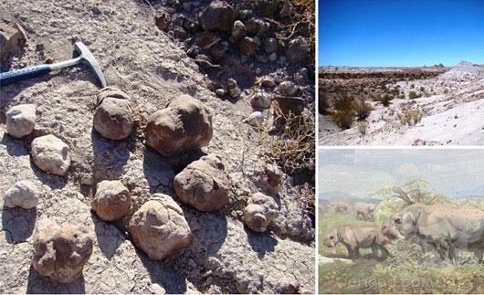 史前便便!世界上最古老的公共厕所发现上千恐龙化石粪便