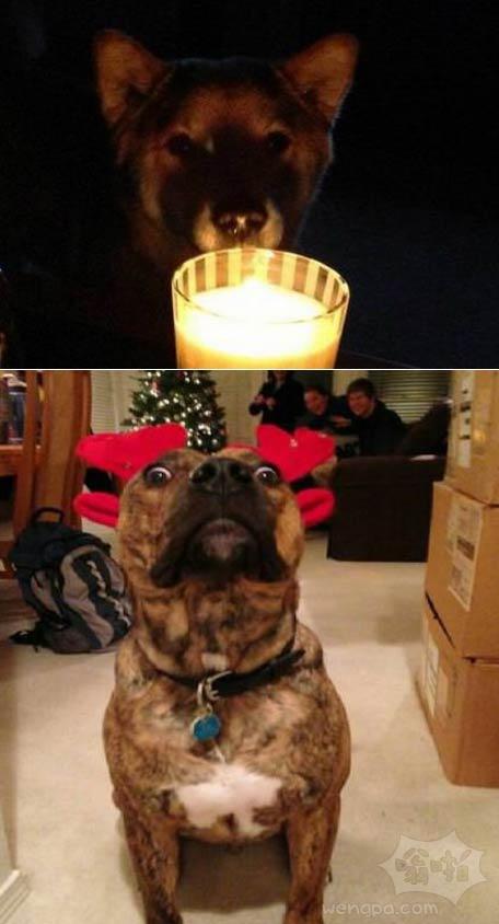 可怕的狗的故事