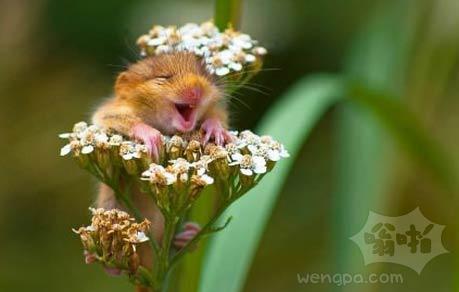 哈哈,我要做花仙子