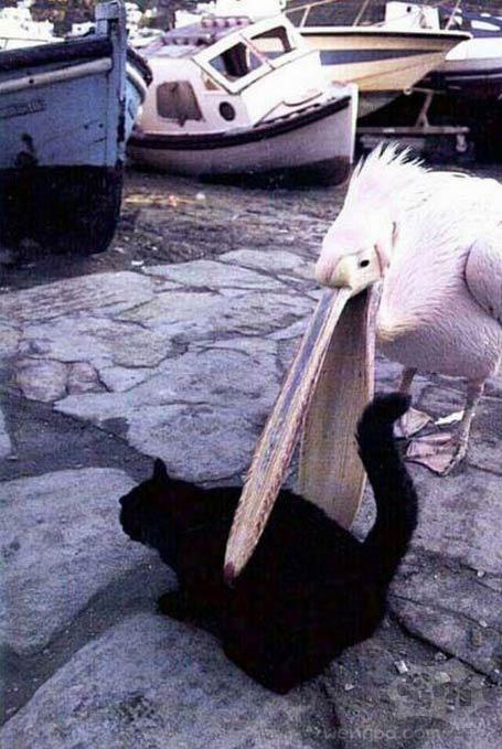 我是猫儿,不是鱼!!