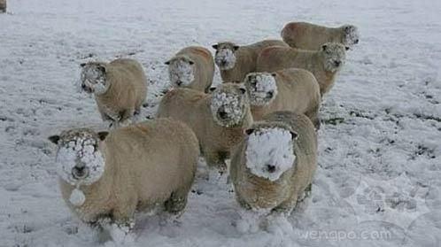 笑神马笑!!冬天吃草就是这个样子的好吗!!!