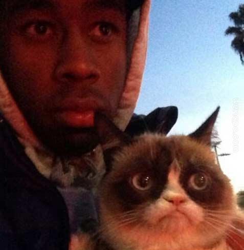 暴脾气躁猫和泰勒