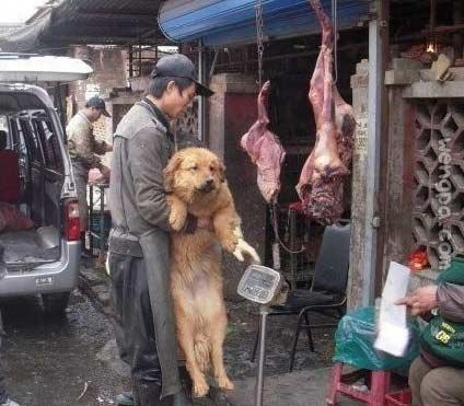 路过一市场,看到这一幕,顿时感到很无奈! 人有许多梦想,我的梦想是可以开一个养狗场,收留那些被遗弃或流浪的小狗们,并呼吁大家拒绝吃狗肉!如果你也有感触,转发给你身边的朋友吧!