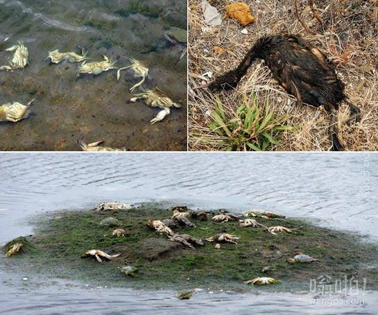 青岛爆燃事故一月:海洋污染显现