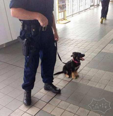 德国警察和他的可怕的狗
