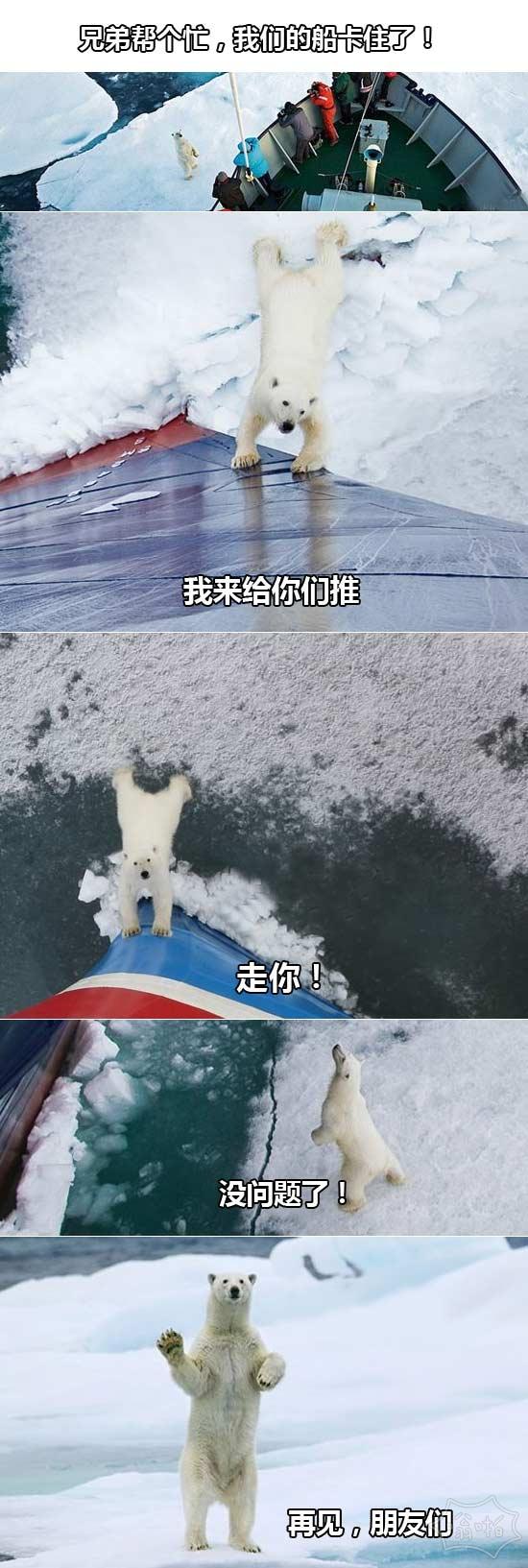 好人北极熊