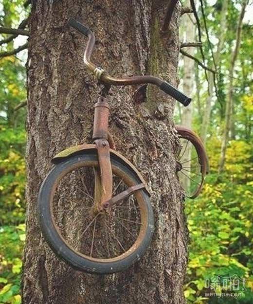 1914年,一个小男孩把自行车锁在了树上后就去参加战争了,从此以后,他再也没有回来,而那辆自行车,也被永远地留在了那里。