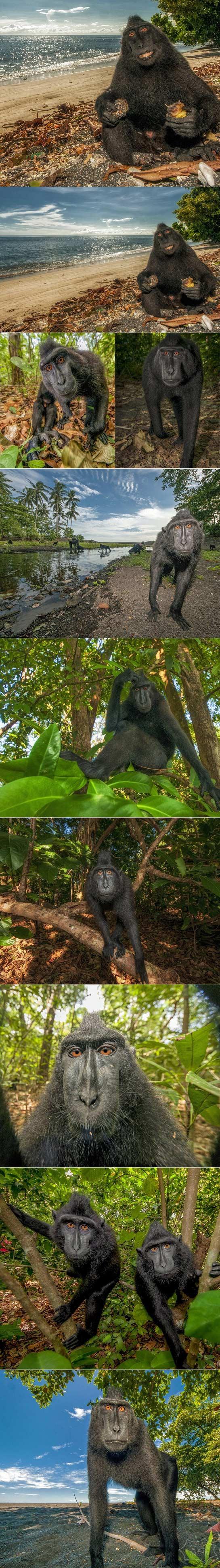 希望你在这里!住在海滩边笑嘻嘻的猴子对来到的摄影师表示惊讶