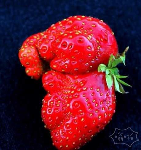 这草莓看起来像一只小象