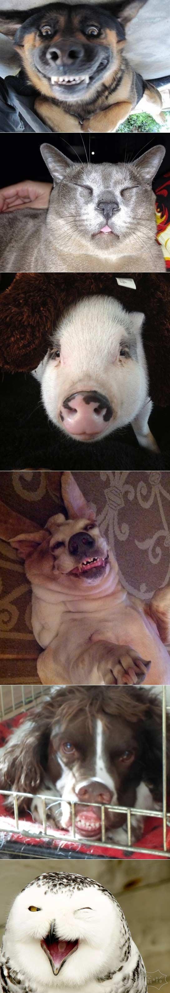 动物表情帝