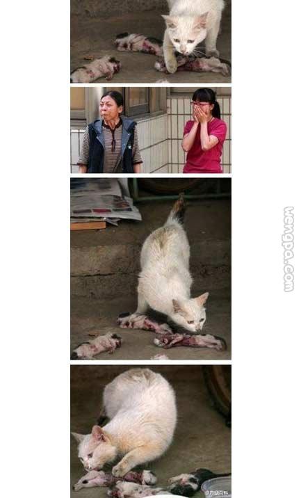 一寄养在车棚的野猫生的四只小猫被人虐待而死,并且放在母猫面前。小猫身上布满弹孔,浑身是血。其中一只小猫脖子被绳子拉长,胸被剖开,心脏外露,另外两三只小猫头被踩扁,估计小猫身上的弹孔为金属玩具枪所致,虐死并放在母猫身边,猫妈妈看着尸体落泪
