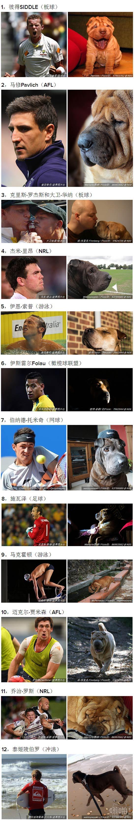 12澳大利亚体育明星,看起来像沙皮狗