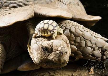 140岁的妈妈和她5天大的孩子