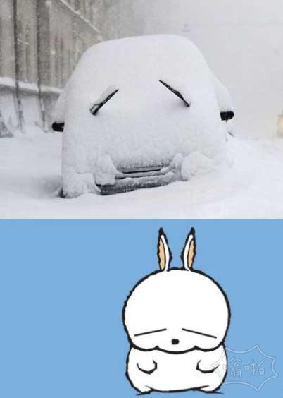 流氓兔,是你么?