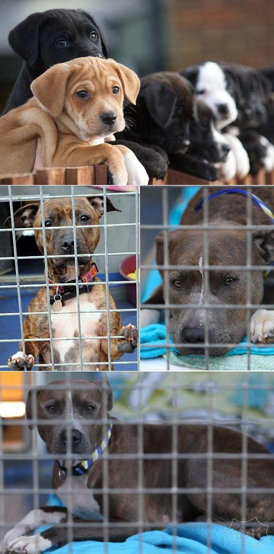 动物收容所的狗狗,眼神忧郁啊
