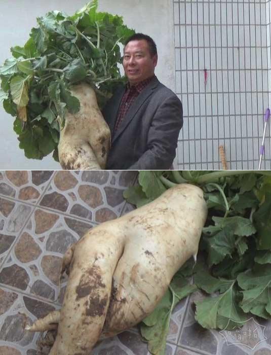村民在自家院子挖出巨型萝卜 重28.5斤