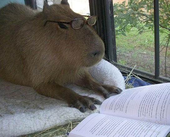 躺床上看书是我这一天中最惬意的时刻