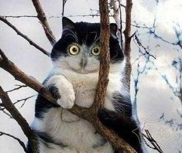 没事你装什么猫头鹰啊,赶快给我下来抓老鼠去。。
