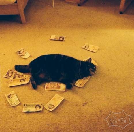原来猫也财迷