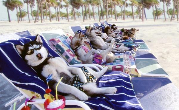 椰林、沙滩,好安逸哦