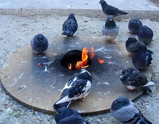 天天下雪冻死了,大家快过来烤火