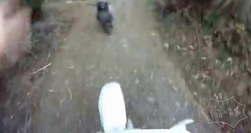 哈哈哈哈骑个摩托车上山被一头羊冲出来撞翻,撞完还在那儿原地画圈圈!!。。伱以为骑个电驴就牛X啊,這是山羊的地盘!杠上了啊这是!!全程没完没了!(视频)