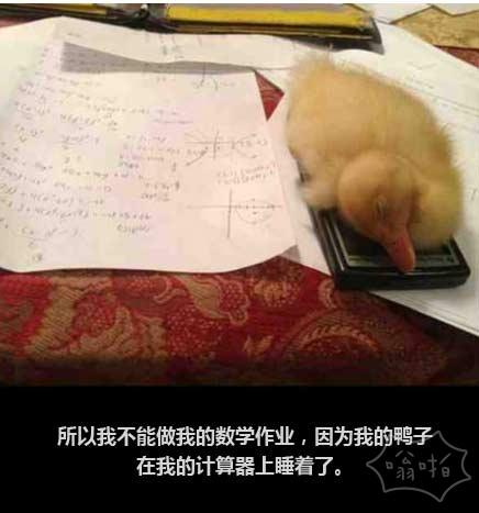 没有人相信狗吃了我的作业了,所以…