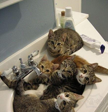 主银我们准备好了。。快给我们洗澡吧