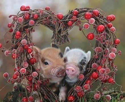 快乐的小猪猪~~