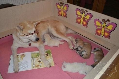 我故事还没讲完呢,你们就都睡着啦??