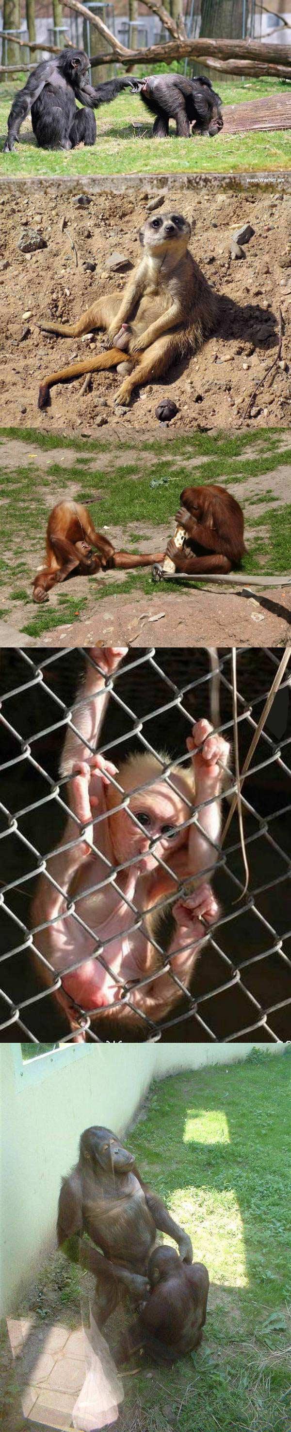 5大理由为什么孩子们不应该参观动物园