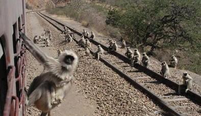 外出求学,一家老小在月台送行。