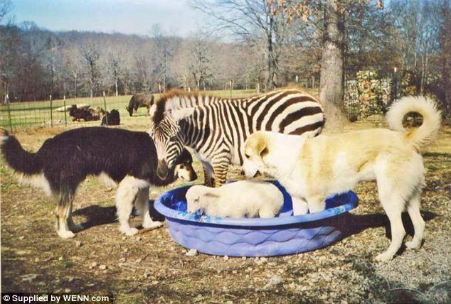 动物避难所里不寻常的友谊