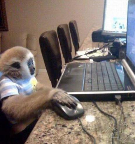 互联网上没有人知道你是一只猴子
