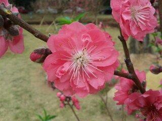 我的桃花很美吧,赞了都有桃花运