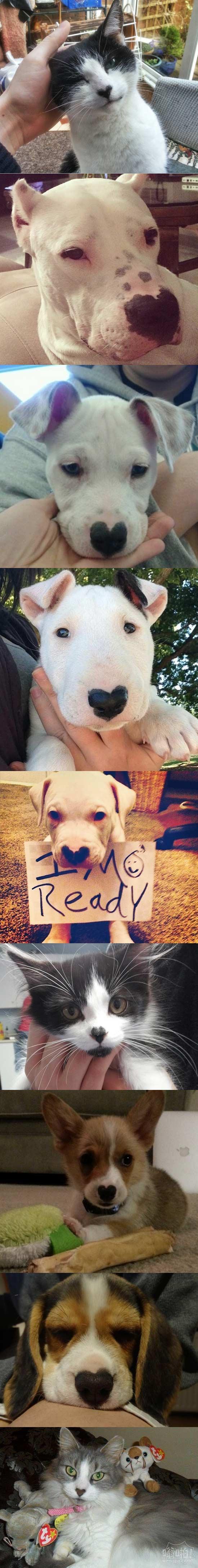 """鼻子上有""""心""""的动物们"""