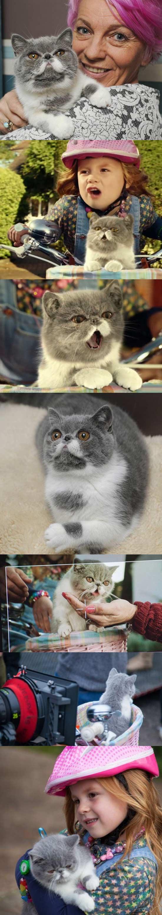 大胡子家猫新广告(视频)